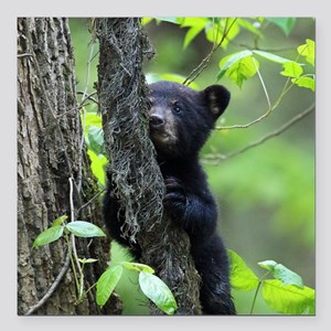 "Black Bear Cub Square Car Magnet 3"" x 3"""