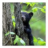 Animals black bears Square Car Magnets