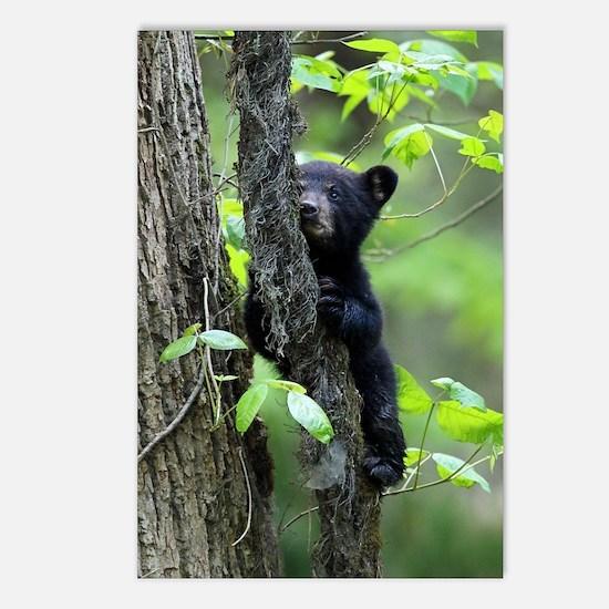 Black Bear Cub Postcards (Package of 8)