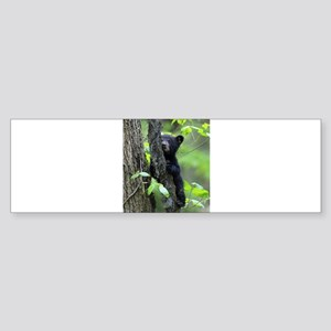 Black Bear Cub Bumper Sticker