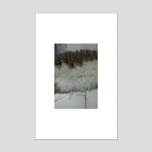 maine coon laying Posters