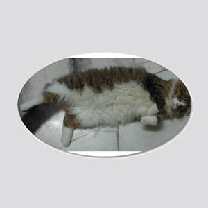 maine coon laying Wall Decal