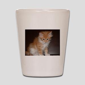 maine coon orange white tabby kitten sitting Shot