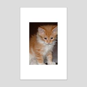 maine coon orange white tabby kitten sitting Poste