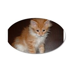 maine coon orange white tabby kitten sitting Wall