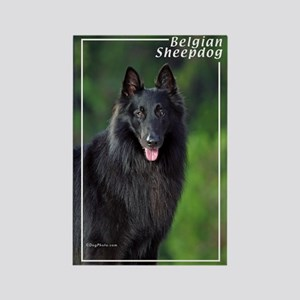 Belgian Sheepdog-1 Rectangle Magnet