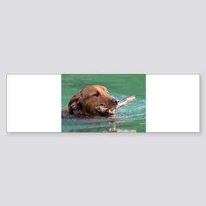 Happy Retriever Dog Bumper Sticker