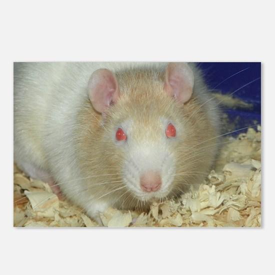 Mr. Rat Postcards (Package of 8)