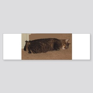 manx sleeping Bumper Sticker