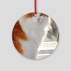 norwegian forest cat orange white sitting 4 Round