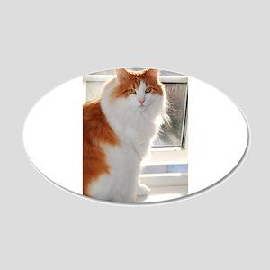 norwegian forest cat orange white sitting 4 Wall D
