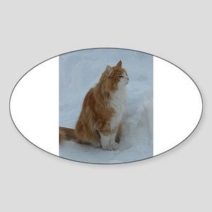 norwegian forest cat orange white sitting in snow