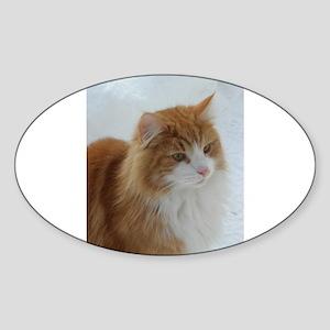 norwegian forest cat orange white Sticker
