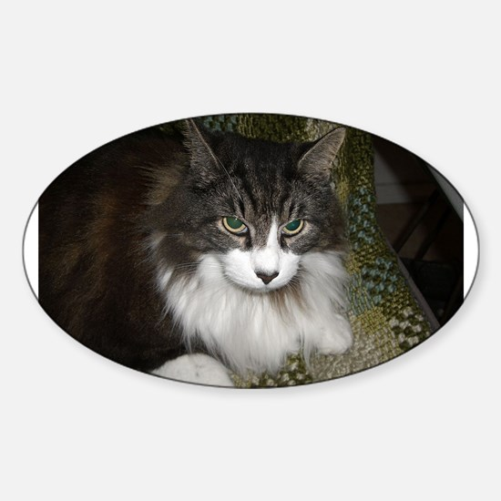 norwegian forest cat brown tabby white laying Stic