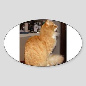 norwegian forest cat orange tabby sitting Sticker