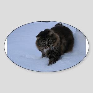 norwegian forest cat brwon tabby in snow Sticker