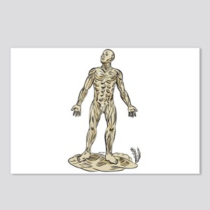 Human Muscle Anatomy Etching Postcards (Package of