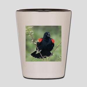 Red-Winged Blackbird Shot Glass