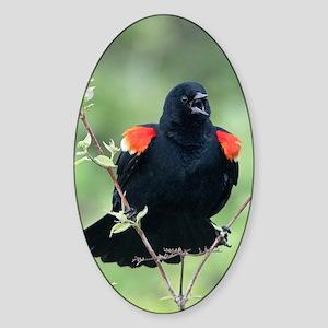 Red-Winged Blackbird Sticker (Oval)