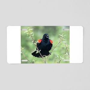 Red-Winged Blackbird Aluminum License Plate