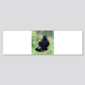 Red-Winged Blackbird Bumper Sticker