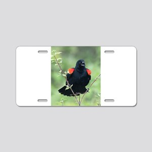 Red-Winged Blackbird Aluminum License Plate