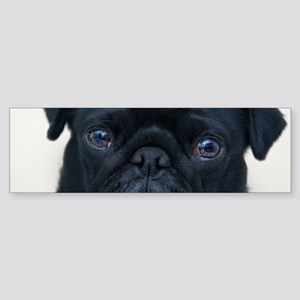 Pug Face Bumper Sticker
