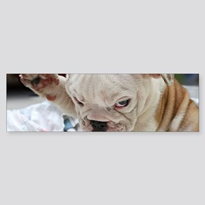 Funny English Bulldog Puppy Bumper Sticker