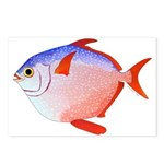 Opah Postcards (Package of 8)
