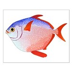 Opah Posters