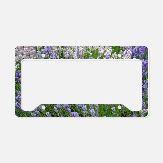 Cool Fields meadows License Plate Holder