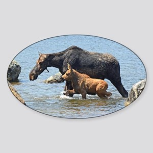 Cow & Calf Moose Oval Sticker