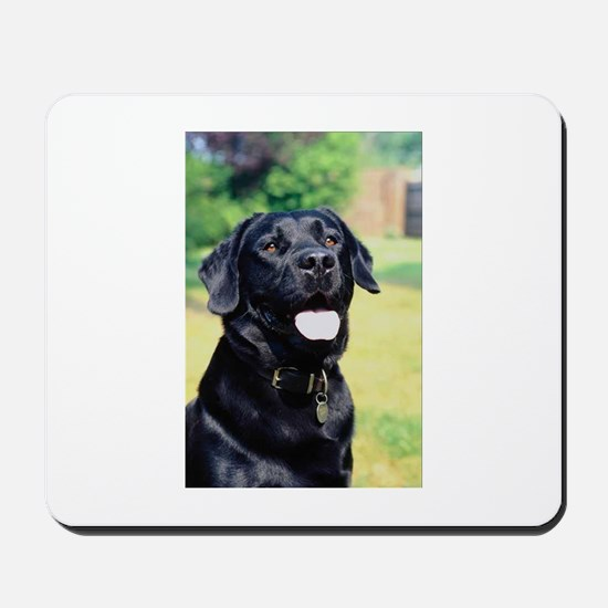 Black Lab Photo Mousepad