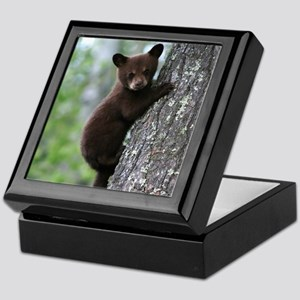 Bear Cub Climbing a Tree Keepsake Box