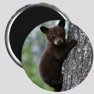 Bear Cub Climbing a Tree Magnets