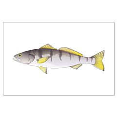 White Seabass Posters