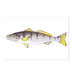 White Seabass Postcards (Package of 8)