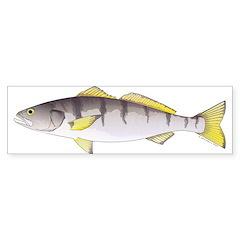 White Seabass Bumper Bumper Sticker