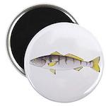 White Seabass Magnets