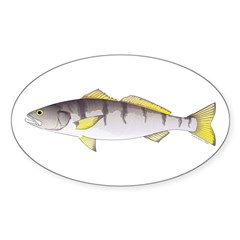 White Seabass Decal