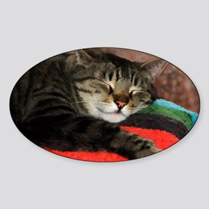 Cat Snoozing Sticker (Oval)