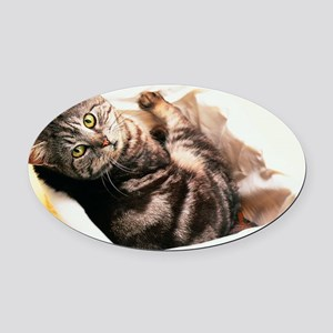 Tabby in Basket Oval Car Magnet