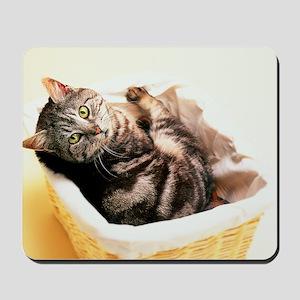 Tabby in Basket Mousepad