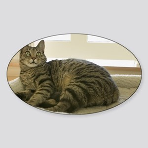 Catbed Kitty Sticker (Oval)