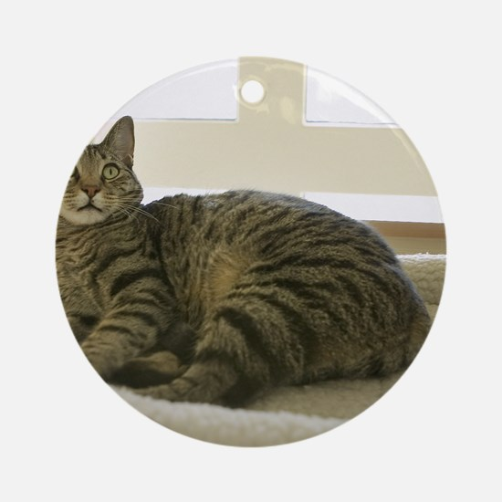 Catbed Kitty Round Ornament