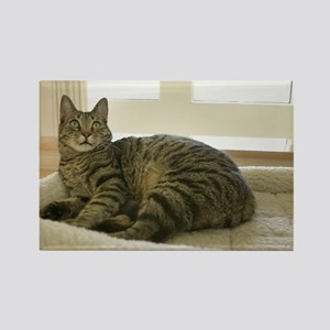 Catbed Kitty Rectangle Magnet