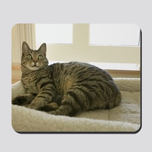 Catbed Kitty Mousepad