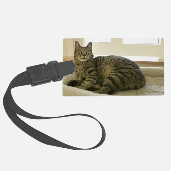 Catbed Kitty Luggage Tag