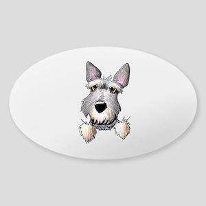 Pocket Schnauzer Sticker (Oval)