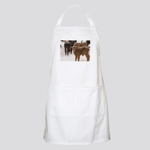 Calves in The Snow Apron